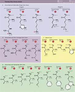 What Is The R-group Of Amino Acids  How Important Are They In Biology