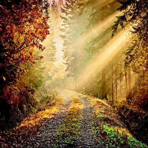 wall forest path sun beam giant wallpaper mural wp
