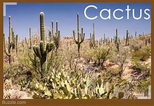 Desert Plants Names List | www.pixshark.com - Images ...