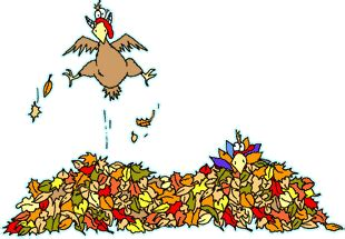 animated thanksgiving day wallpapers images pictures photos clipart free happy