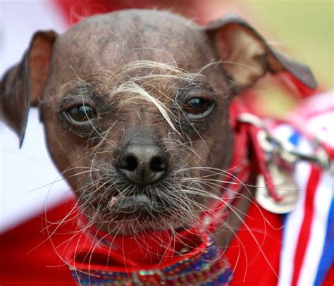 mugly the world s ugliest dog 4 shows made better by him