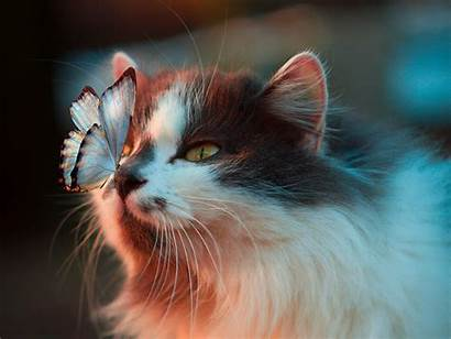 Butterfly Cat Nose Animal Wallpapers Background
