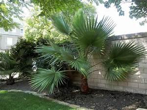 Palmen Für Draußen : palmen das erste mal washingtoner drau en berwintern ~ Michelbontemps.com Haus und Dekorationen
