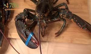 Comment Choisir Un Four : comment choisir un homard vid o ~ Melissatoandfro.com Idées de Décoration