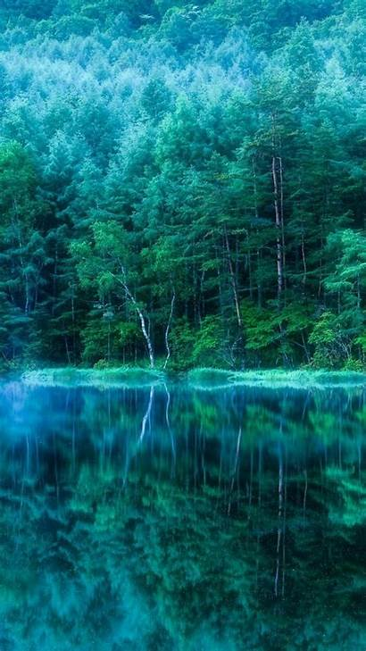 Teal Iphone Mobile Early Morning Trees Wallpapers