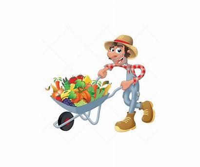 Harvest Vector Fruit Vectors Vegetable Illustration Pack