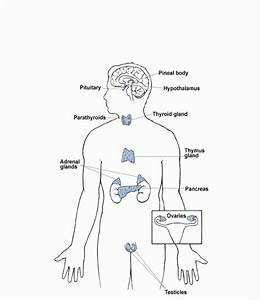Diagram nolan image collections how to guide and refrence endocrine system diagram unlabeled image collections how ccuart Images
