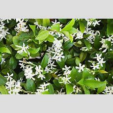 Very Fragrant Flowers