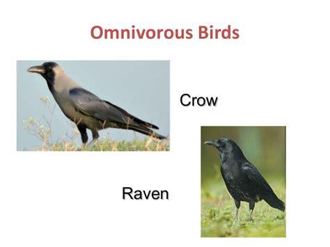 is a bird an omnivore 2 hrly gs ch 08 vertebrates part 2
