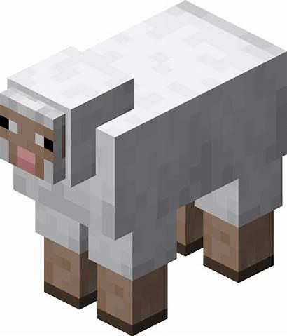 Sheep Oveja Minecraft Owca Animales Wiki Wikia