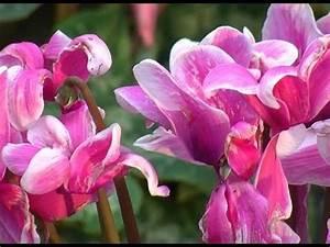 Fleur D Hiver Pour Jardinière : les fleurs d 39 automne pour jardini re youtube ~ Dailycaller-alerts.com Idées de Décoration