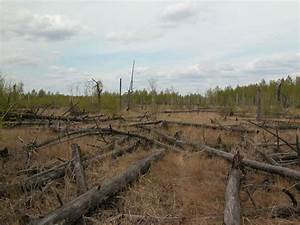 Forests Around Chernobyl Aren't Decaying Properly ...
