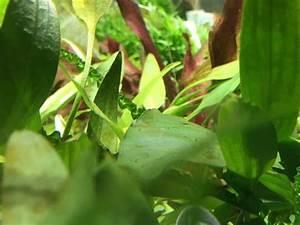 Pflanzen Für Aquarium : aquarium d nger nahrung f r deine pflanzen ~ Buech-reservation.com Haus und Dekorationen