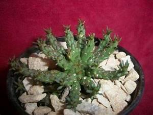 Fotos En Infojardin Cactus Y Crasas fotos y nombres de 17 cactus y crasas infojardin