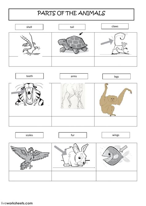 Parts Of The Animals  Interactive Worksheet