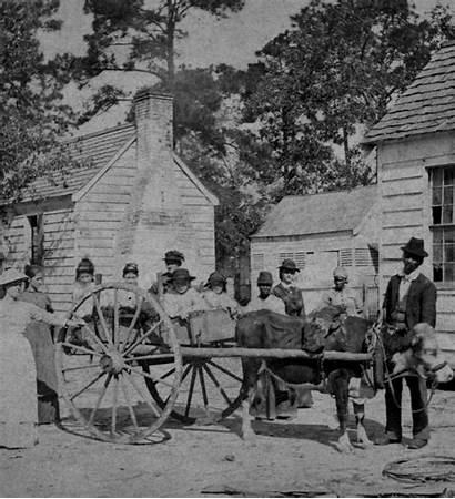 Summerville Carolina South Ox Cart Posing Adults