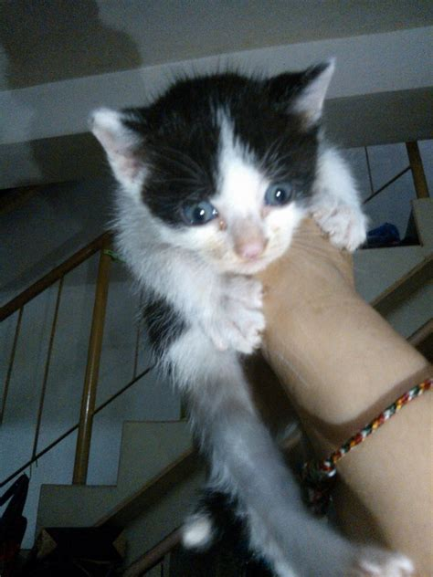 kittens  adoption  kl adopted yap wai kens