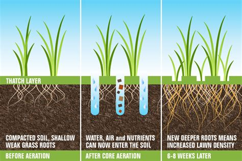 benefits of aerating lawn why aeration and overseeding are needed in the fall growingreen