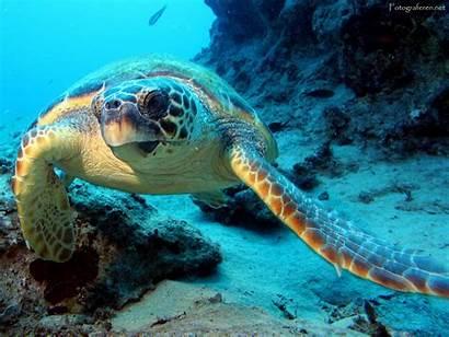 Turtle Turtles Fanpop Sea Ocean Wallpapers
