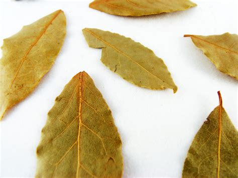 bay leaf replacement how to substitute bay leaves in recipes