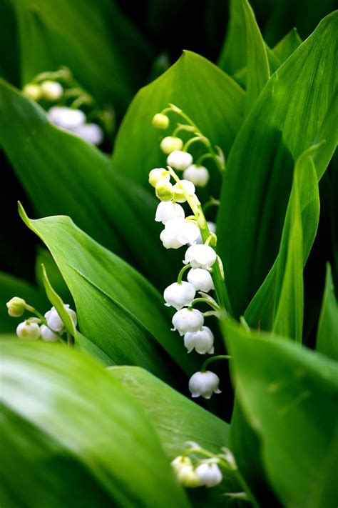 Top 10 Fragrant Plants For A Sensory Garden Paradise
