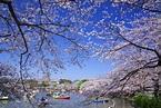 上野恩賜公園的絕色美景|絕景日本