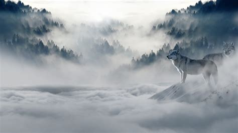 1080p Wolf Wallpaper Hd by Wolf Hd Wallpapers 1080p Wallpaperspit