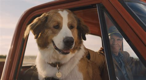 dogs journey meet  pups   animal acting