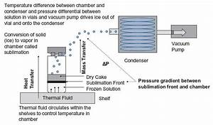 Schematic Of Heat And Mass Transfer In The Freeze Dryer