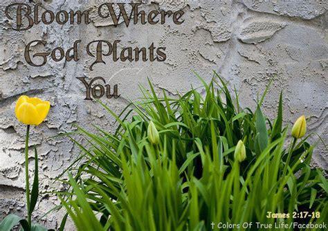 plants god quotes quotesgram
