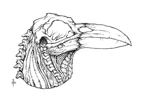 Raven Skull By Edcomics On Deviantart