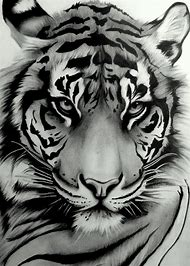 Best White Tiger Tattoo Ideas And Images On Bing Find What You