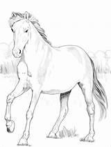 Spagnolo Kuda Druku Spanyol Belajarmewarnai Ausmalbild Disegno Konie Supercoloring Terbaru Ponys sketch template