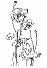 Coloring Flower Printable Poppy Flowers Bestcoloringpagesforkids Drawing Sheets Spring Child Rocks рисунок цветок поиск мак Google sketch template