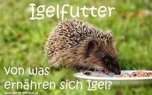 Fressen Igel Mäuse : igel im igelhaus was fressen igel ~ Orissabook.com Haus und Dekorationen