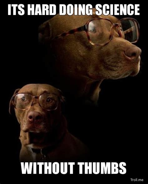 Pet Insurance Meme - 10 things pets would do if they had thumbs healthy paws pet insurance