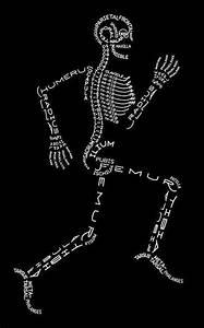 List Of Bones Of The Body Or Skeleton