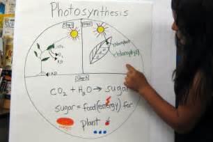 5th Grade Photosynthesis Activity