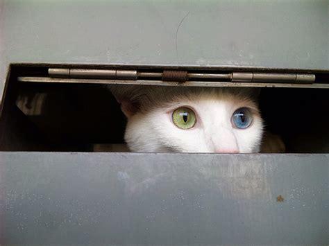 20 Cool Pictures Of Heterochromia Eyes