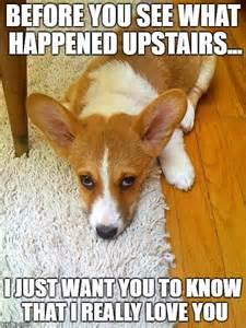 Funny Dog Memes Corgi