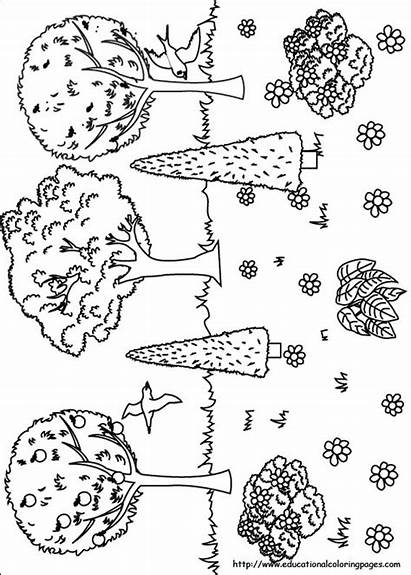 Coloring Nature Pages Printable Worksheets Educational Fun