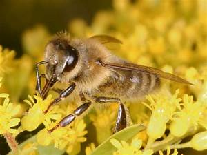 Honey bees demonstrate decision making process to avoid ...