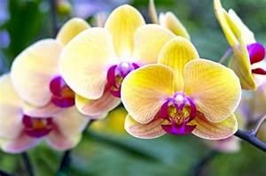 Schöne Orchideen Bilder : orchideen alle wichtigen infos auf einen blick mein sch ner garten ~ Orissabook.com Haus und Dekorationen