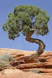 file tree canyonlands national park jpg wikimedia commons