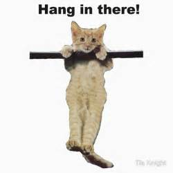 hang in there cat quot hang in there baby kitty cat kitten on branch quot