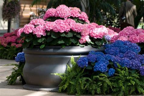 hydrangea colors diy