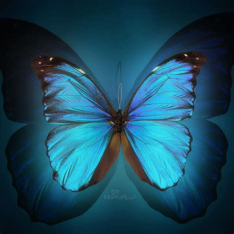Free Animated Butterfly Wallpaper - free butterfly wallpaper animated wallpapersafari