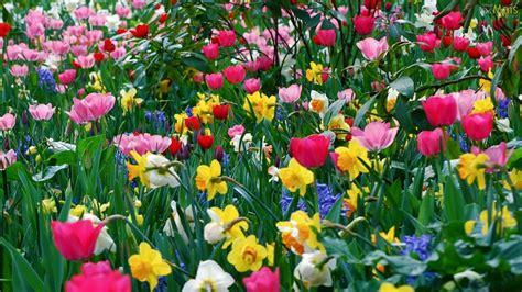 Osmaiscom  Papel De Parede Jardim Florido De Primavera