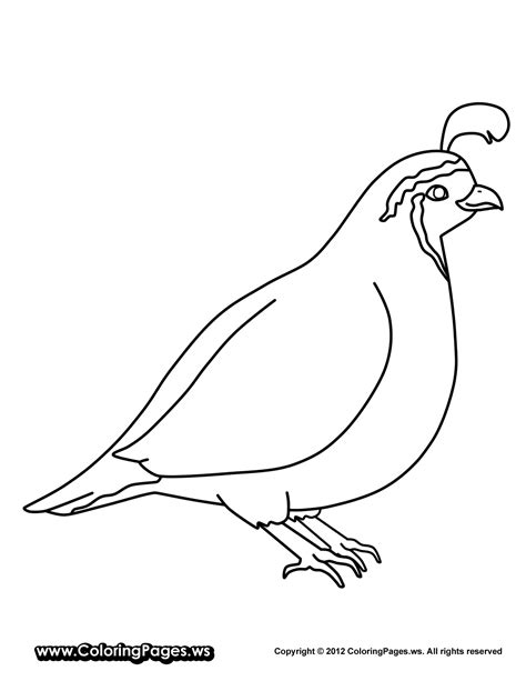 quail coloring pages kidsuki
