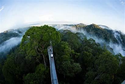 Brunei Ecotourism Temburong Canopy Walk Darussalam Develops